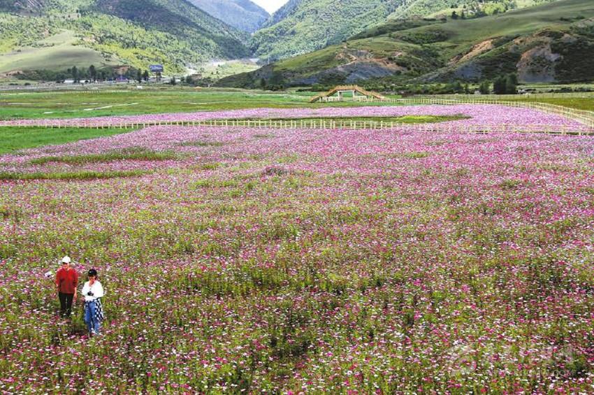 壁纸 成片种植 风景 花 植物 种植基地 桌面 850_565